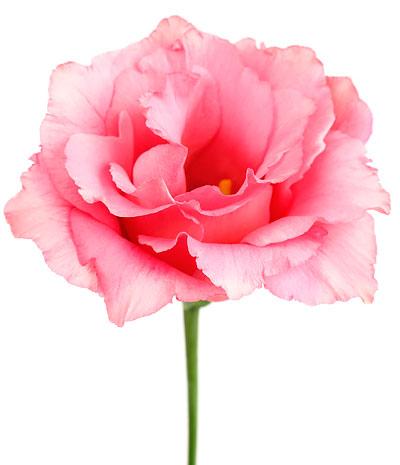 Butiken Brändmarks Blommor