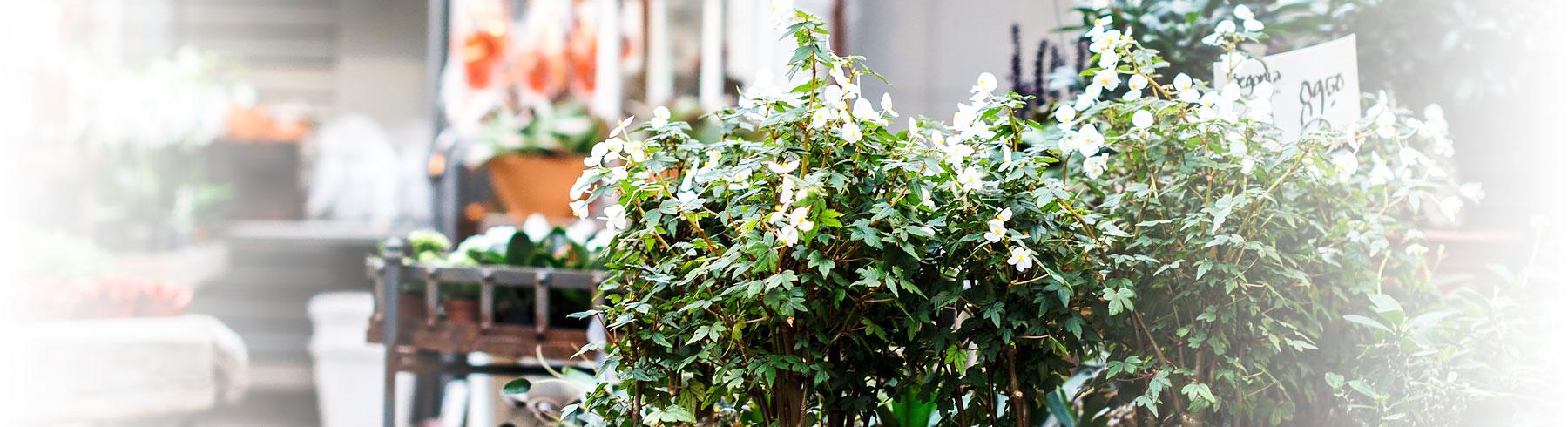 Butiken - Brändmarks Blommor på Trandared i Borås