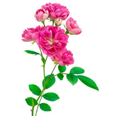 rabatt interflora blommogram